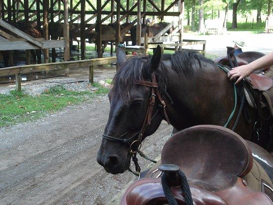 Townsend, TN: Gentle horses