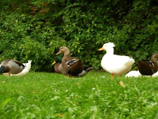 McGregor, IA: ducks as seen from boat