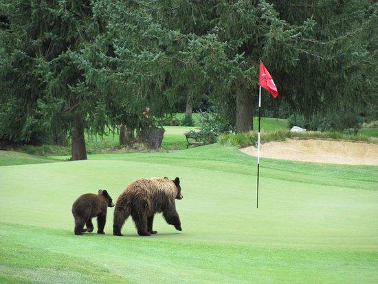 Whistler Golf Club: photo0.jpg