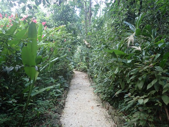 Belmopan, Belice: The walking path to our bungalow