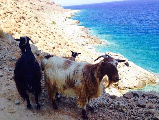 Kaliviani, Grækenland: photo0.jpg