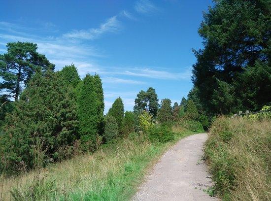 Bedgebury Pinetum Picture Of Bedgebury National Pinetum