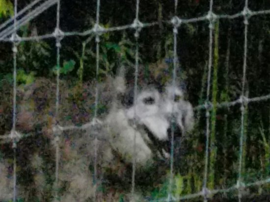 Wolf Sanctuary of PA: 20160716_211221_large.jpg