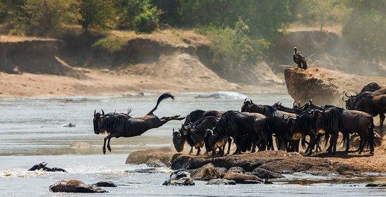 อารูชา, แทนซาเนีย: Great Migration
