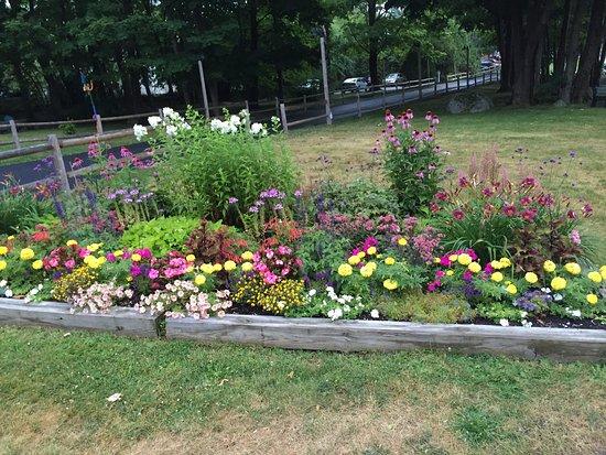 بار هاربور إن: Gorgeous flower beds everywhere!
