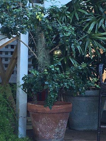 Andrews Inn and Garden Cottages: photo0.jpg