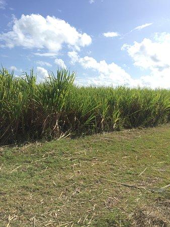 Bayahibe, Dominican Republic: photo9.jpg