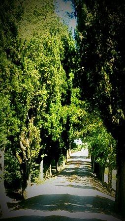 Vicchio, Italia: La Casa del Prosciutto