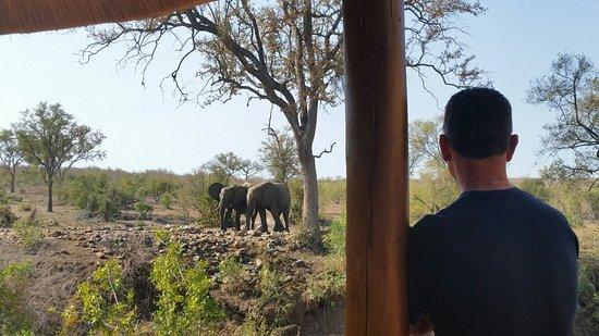 Hoyo-Hoyo Safari Lodge: 20160803_141610_large.jpg