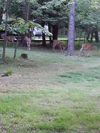 Spencer, TN: The deer were abundant within the park. While very approachable, you should not feed the wildlif
