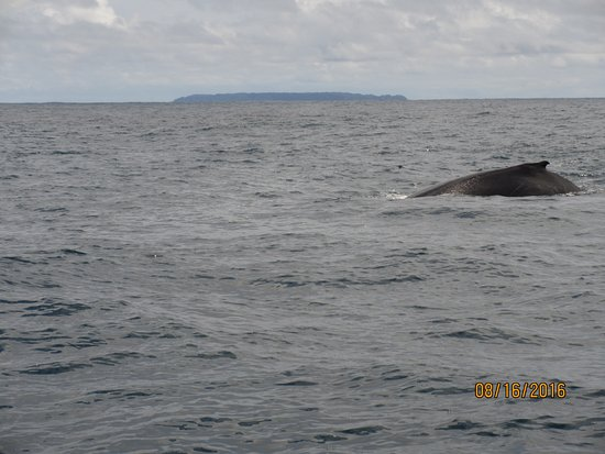 Drake Bay, Kostaryka: typical humpback view-impressive creature!