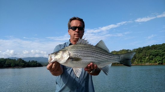 Big ol 39 fish guiding service murphy nc updated 2018 for Freshwater fishing in north carolina