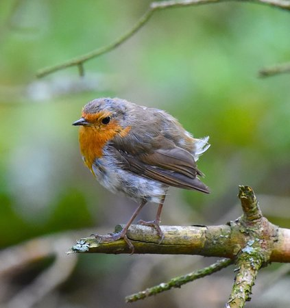 Forres, UK: Birds Dave found.