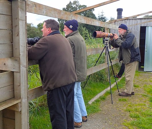 Forres, UK: At the Red Kite hide.