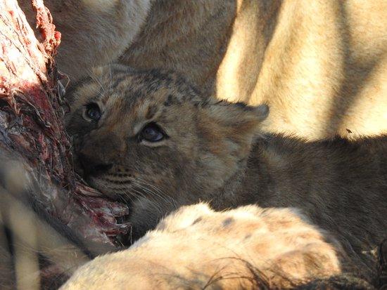 Garonga Safari Camp Photo