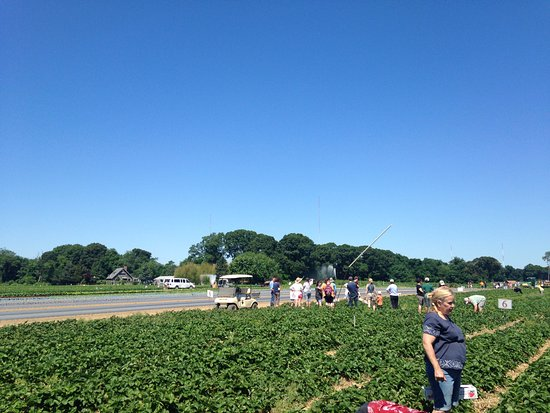 Seekonk, MA: Rows of pickers