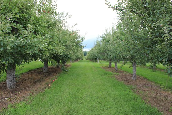 Richmond, MA: Orchards