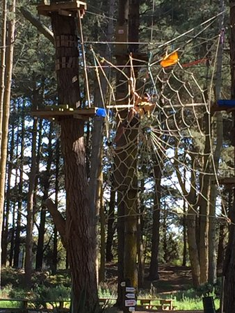 Adrenaline Forest: Climbing through the spider web