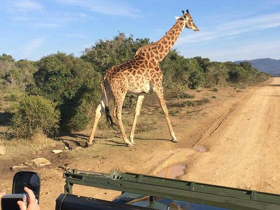 Grahamstown, Южная Африка: Pumba Private Game Reserve