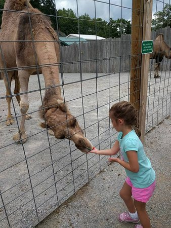 Jones Mills, PA: feeding the camels