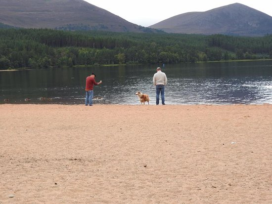 Aviemore, UK: dog deciding if she wants a dip