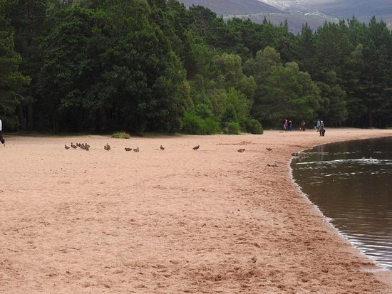 Aviemore, UK: ducks
