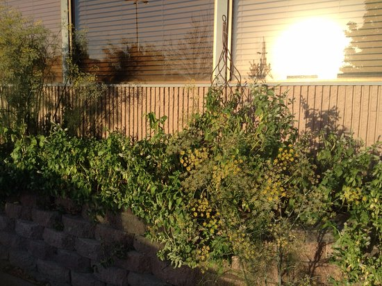 Moscow, Айдахо: herbs outside
