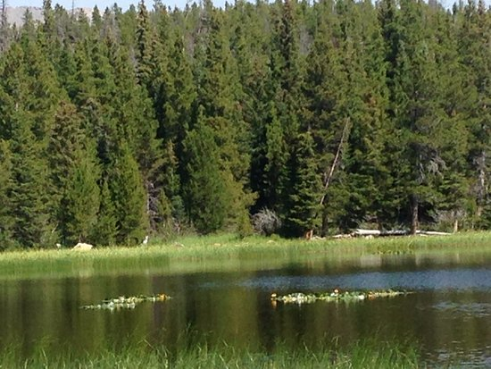 Sylvan Dale Guest Ranch: Hike in Rocky Mountain National Forest