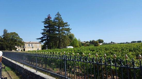 Chateau Marquis de Vauban: 20160825_122617_large.jpg