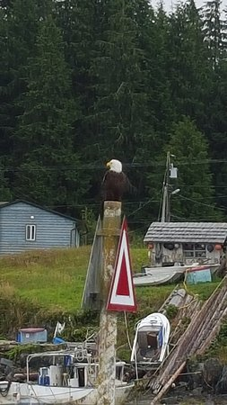 Ucluelet, Canadá: One of many eagles spotted on the tour