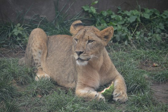 Powell, OH: Columbus Zoo