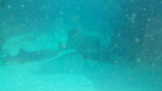 Marine Habitat at Atlantis: 20160825_161003_large.jpg