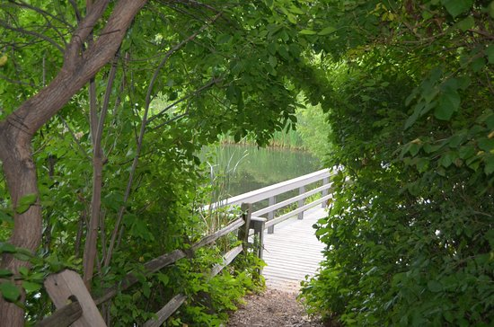 Skokie, IL: path to overlook - end of loop trail