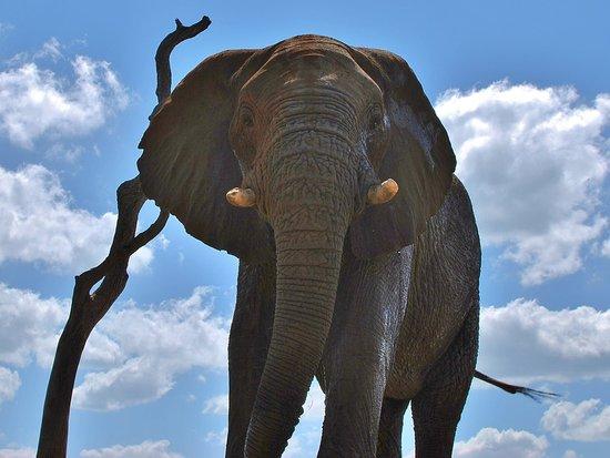 Madikwe Game Reserve 이미지