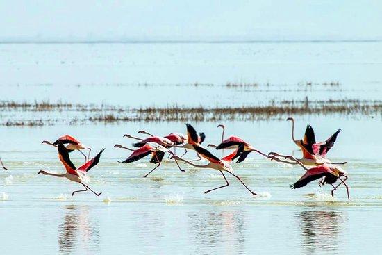 Sultan Sazlığı Bird Sanctuary