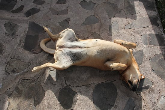 San Agustin Buenavista, Mexique : Maggie wants a belly rub!