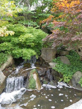 Anderson Japanese Gardens: 20160825_161230_large.jpg