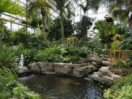 20160825 132921 Picture Of Nicholas Conservatory And Gardens Rockford Tripadvisor