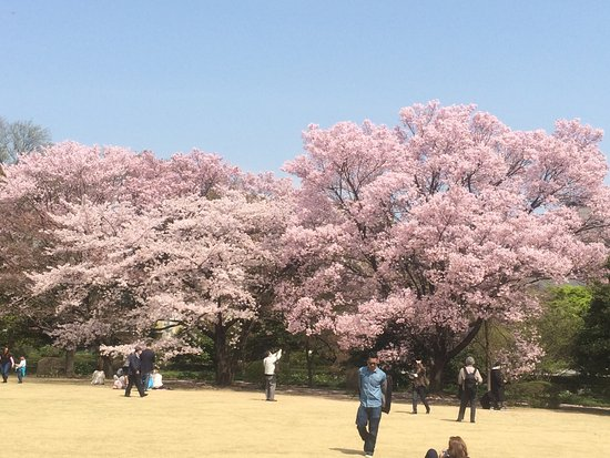 The East Gardens of the Imperial Palace (Edo Castle Ruin): photo0.jpg