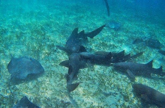 Caye Caulker, Belize: photo3.jpg