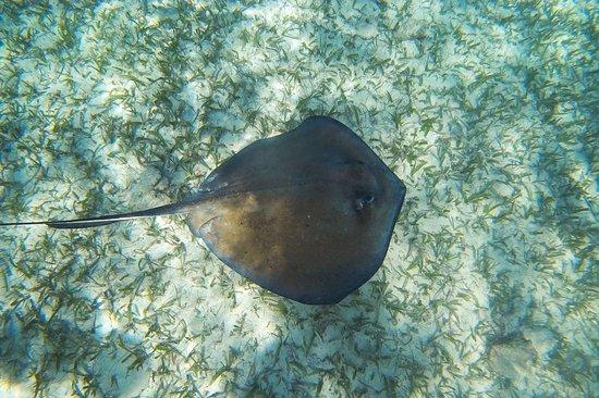 Caye Caulker, Belize: photo4.jpg