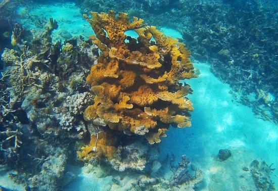 Caye Caulker, Belize: photo5.jpg