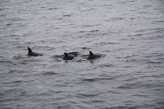 Montezuma, Costa Rica: Trio of Dolphins