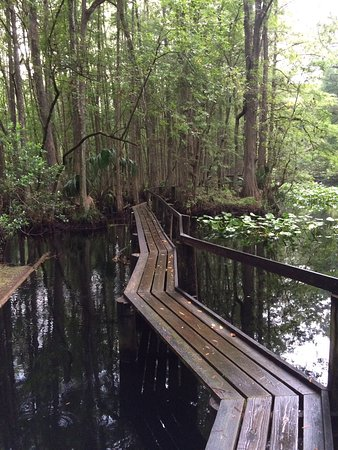 Highlands Hammock State Park: photo2.jpg