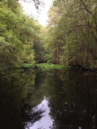 Highlands Hammock State Park: photo3.jpg