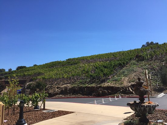 The Meritage Resort and Spa: Vineyard