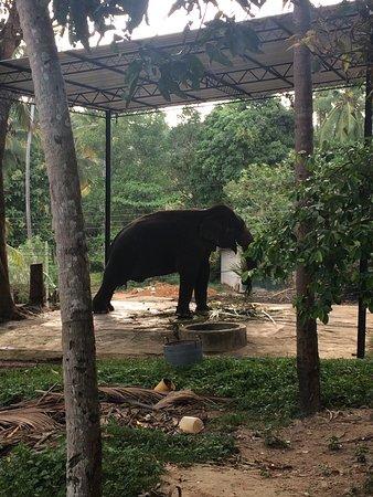 Dikwella, Sri Lanka: photo5.jpg