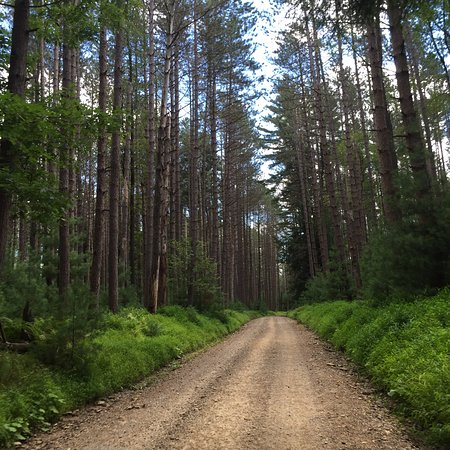 Vowinckel, Pensilvania: Road as you approach the Brass Lantern from Cook Forest State Park
