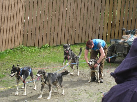 Wheel dogs for the sled dog demonstration