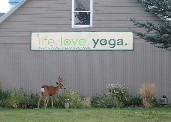 Antler Deer by Life, Love, Yoga, Sisters, Oregon